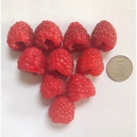 Продам ягоду малины, ремонтантних элитных сортов