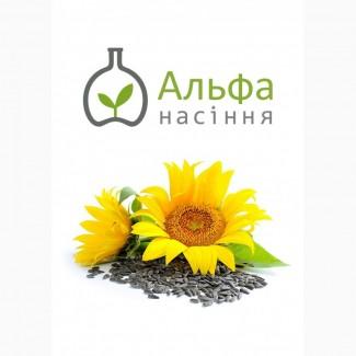Продам гібрид соняшника АНЦИЛЛА (УРОЖ.2018 РОКУ)
