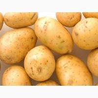 Картофель «Ривьера» 3кг.сетка