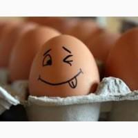 Яйця Курячi, домашнi, свiжайшi!!! НЕ ОПТ