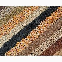Закуповую зернові і олійні