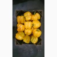 Продам перец Занделла