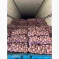 Продам товарную и семенную Картошку 5+ сорта Джелли, Галла, Бриз и др
