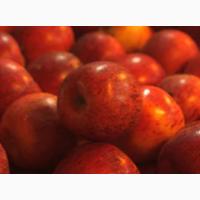 Куплю яблоки сортов с макс. длительным сроком хранения