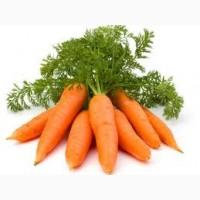 Купим морковь 1-ой категории