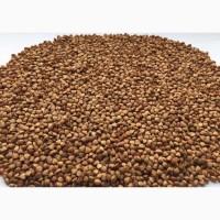 Quality Organic Buckwheat EXPORTERS