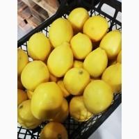 Продаем лимон майер