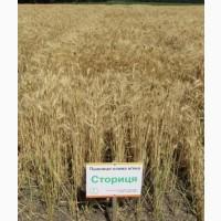 Продам Семена, посевной материал, Пшеницы Сторица Элита