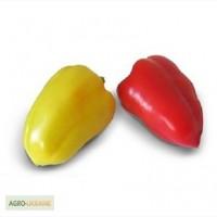 Семена сладкого перца YANIKA F1 / ЯНИКА F1 от Китано