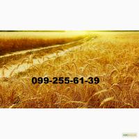 Закупаем-пшеницу и ячмень- на элеваторах Днепропетровской и Харьковской областей.Дорого