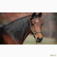 Комбикорм, корм для лошадей гранулированный тм МаксимуМ