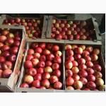 Свежие яблоки из сада