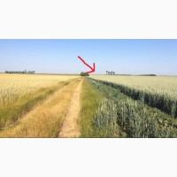 Посівний матеріал озимої пшениці канада сорт Тесла