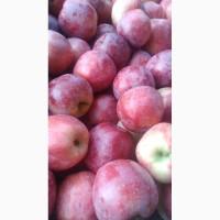 Яблука опт флоріна та інші коло умані