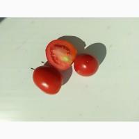 Продам помидор сорт Рио Гранде и Форсаж