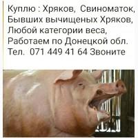 Куплю Свиноматок Хряков