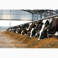 Кормова добавка Проф КТ (для високопродуктивних корів)