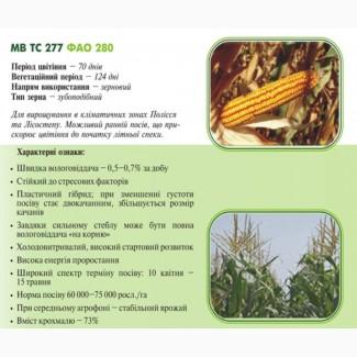Насiння кукурудзы МВ ТС 277 (ФАО 280) ДЦ Академії Наук Угорщини м.Мартонвашар