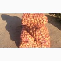 Продам семенной картофель кубанка и королева анна