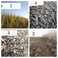 Вирощуйте топінамбур – отримайте власну сировину для пелет