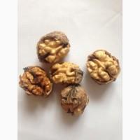 Продам орех грецкий в скорлупе Выход ядра до 40%