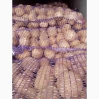 Продам товарную Картошку 5+ сорта Джелли, Галла, Королева Анна и др