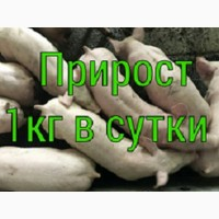 Поросят на відгодівлю оптом зі свинокомплексу