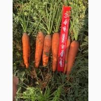 Продам морковь оптом, продам морковь оптом Харьков, продам морковь со склада