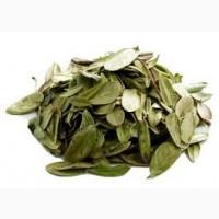 Сухе листя брусниці