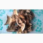 Продам сушенный белый гриб для гурманов