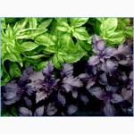 Продаем свежие травы, зелень, салаты высокого качества оптом