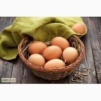 Яйца коричневые столовые диетические продам, опт