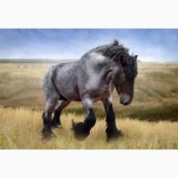 Продам лошадей на мясо жывым весом