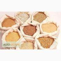 Услуги по осушке и переработке всех видов зерна, всех видов ягод, фруктов и овощей