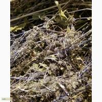 Травяні чаї Волині