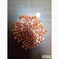 Гибрид кукурузы БОРОЗЕНСЬКИЙ 277 МВ-(ФАО 250) от производителя