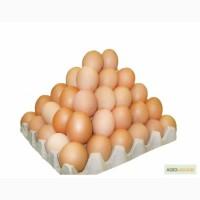 Продам яйцо С1