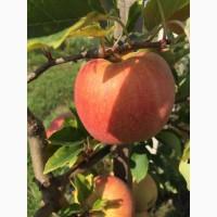 Яблука натуральні