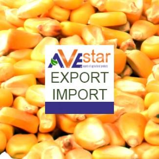 До уваги зернотрейдерів. Закуповуємо кукурудзу. CIF, Коломбо, Шрі-Ланка