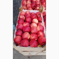 Допоможу загрузити яблука на експорт