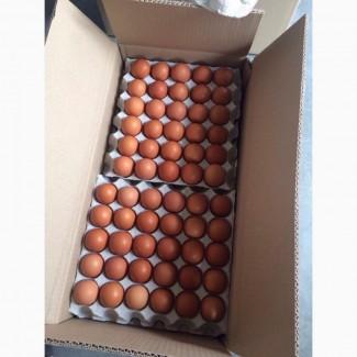 Яйца Куриные столовые на экспорт