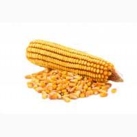 Насіння кукурудзи - супер