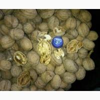 Продам Грецкий орех Без янтаря бойнный В идеальном качестве