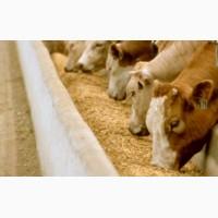 Дрожжи кормовые