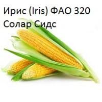 Семена кукурузы Ирис ФАО 320 (Франция) Солар Сидс