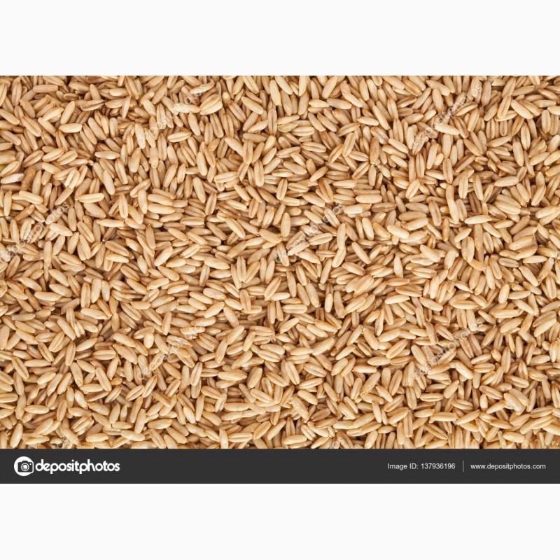 семена посевной материал