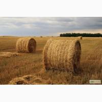 Продажа пшеничной, ячной и соевой соломы тюкованной