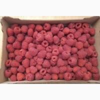 Продам малину сорт полка высшего качество доставка по всей Украине