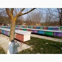 Бджолопакети карпатської породи 2020р