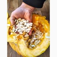 Гарбузове насіння | Тыквы семена | Сортове | Багатоплідна